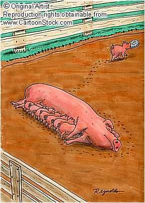 Are Your Little Piggies Walking Away with The Bank?